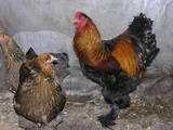 Папуги й птахи Різне, ціна 150 Грн., Фото