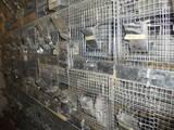 Грызуны Клетки  и аксессуары, цена 200 Грн., Фото