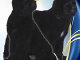 Собаки, щенки Ньюфаундленд, цена 7500 Грн., Фото