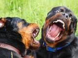 Тварини Різне, Фото