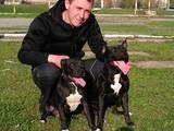 Собаки, щенята Різне, ціна 500 Грн., Фото