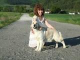 Собаки, щенята Золотистий ретрівер, ціна 4010 Грн., Фото