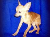 Собаки, щенки Неизвестная порода, цена 3000 Грн., Фото