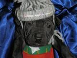 Собаки, щенки Неизвестная порода, цена 23000 Грн., Фото