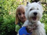 Собаки, щенята Вестхайленд уайт тер'єр, ціна 2000 Грн., Фото