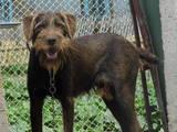 Собаки, щенята Невідома порода, ціна 200 Грн., Фото