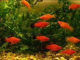 Рыбки, аквариумы Рыбки, цена 1 Грн., Фото
