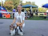 Собаки, щенки Спаривание, цена 3000 Грн., Фото