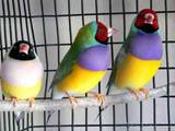 Папуги й птахи Клітки та аксесуари, ціна 1000 Грн., Фото