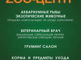 Ветеринарія Ветеринари та ветеринарні клініки, ціна 1 Грн., Фото