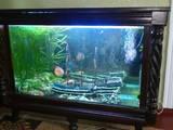 Рыбки, аквариумы Аквариумы и оборудование, цена 5000 Грн., Фото