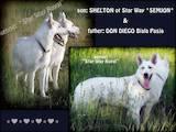 Собаки, щенята Східно-Європейська вівчарка, ціна 13500 Грн., Фото