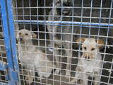 Собаки, щенки Приюты и гостиницы, Фото