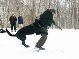 Собаки, щенята Східно-Європейська вівчарка, ціна 3000 Грн., Фото