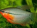 Рибки, акваріуми Рибки, ціна 7 Грн., Фото