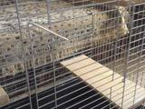 Гризуни Клітки та аксесуари, ціна 500 Грн., Фото