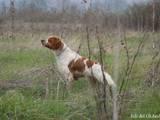 Собаки, щенки Разное, Фото