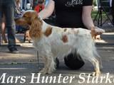 Собаки, щенята Спаровування, ціна 1000 Грн., Фото