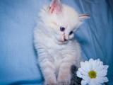 Кошки, котята Разное, цена 3500 Грн., Фото