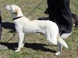 Собаки, щенята Невідома порода, ціна 50 Грн., Фото