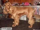 Собаки, щенки Ветеринарные услуги, цена 180 Грн., Фото