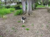 Собаки, щенки Жесткошерстный фокстерьер, цена 3000 Грн., Фото