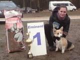 Собаки, щенята Заняття, тренування, ціна 40 Грн., Фото