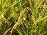Гризуни Корм, ціна 25 Грн., Фото