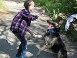 Собаки, щенята Східно-Європейська вівчарка, ціна 100 Грн., Фото