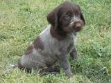 Собаки, щенки Неизвестная порода, цена 2500 Грн., Фото