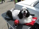 Собаки, щенята Послуги перукаря, миття, Фото
