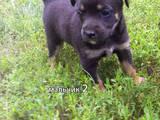 Собаки, щенята Різне, ціна 50 Грн., Фото