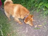 Собаки, щенята Невідома порода, ціна 3500 Грн., Фото