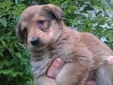Собаки, щенки Беспородная, цена 1 Грн., Фото