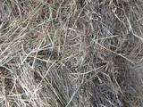 Грызуны Корм, цена 25 Грн., Фото