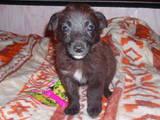 Собаки, щенята Безпорідна, ціна 100 Грн., Фото