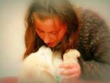 Собаки, щенки Приюты и гостиницы, цена 50 Грн., Фото