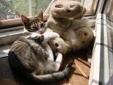 Кошки, котята Белоножка, цена 2 Грн., Фото
