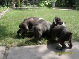 Собаки, щенята Невідома порода, ціна 400 Грн., Фото