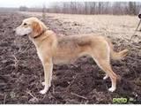 Собаки, щенки Разное, цена 500 Грн., Фото