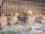Попугаи и птицы Разное, цена 100 Грн., Фото