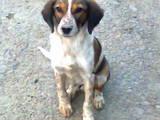 Собаки, щенята Невідома порода, ціна 600 Грн., Фото