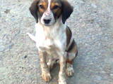 Собаки, щенки Неизвестная порода, цена 600 Грн., Фото
