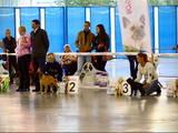 Собаки, щенята Бульмастиф, ціна 11000 Грн., Фото