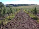 Дачи и огороды Черкасская область, цена 29700 Грн., Фото