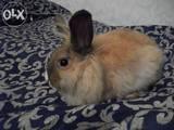 Гризуни Кролики, ціна 10 Грн., Фото