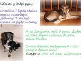 Собаки, щенки Беспородная, Фото