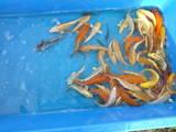 Рибки, акваріуми Рибки, ціна 12 Грн., Фото