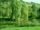 Дома, хозяйства Черновицкая область, цена 420000 Грн., Фото