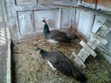 Папуги й птахи Різне, ціна 600 Грн., Фото